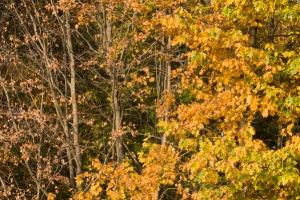 Autumn foliage free stock photo
