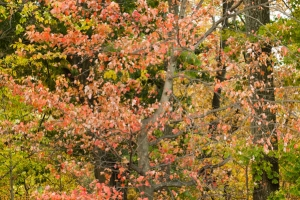 Colorful fall foliage free stock photo