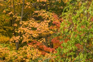 Colors of autumn free stock photo