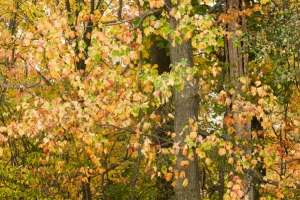 Fall foliage free stock photo