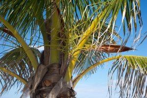Palm tree close-up free stock image