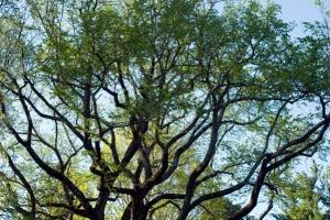 Green-leaved tree free stock photo