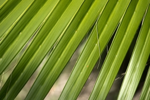 Fronds in sunlight free stock photo