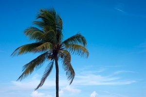 Palm tree and sky free stock image