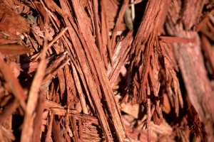 Red mulch free stock image
