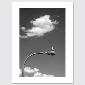 Seagull resting on a light post in Wantagh, New York.