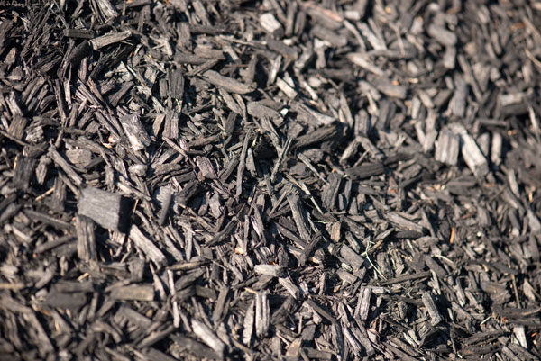 Black mulch free stock pic