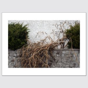 Limited edition print of dead and living bushes