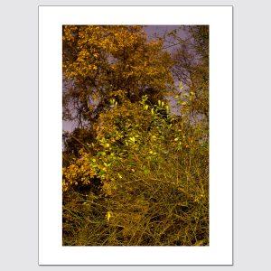 Colorful foliage limited edition photo print