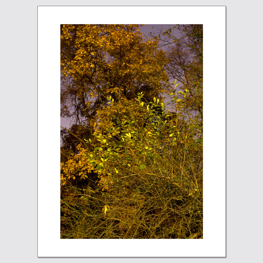 Colorful foliage limited edition photo print