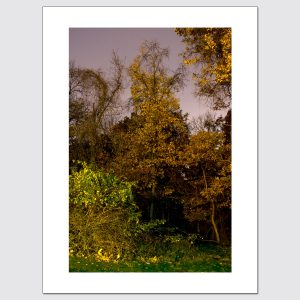 Night-time foliage limited edition print