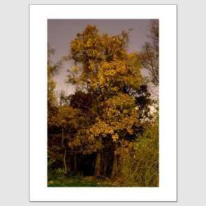 Limited edition print of colorful foliage at night