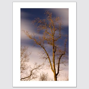 Leafless Tree limited edition photographic print