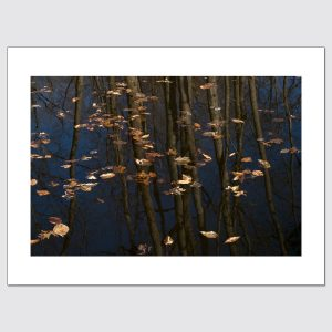 Limited edition print of leaves & reflections in backyard pond