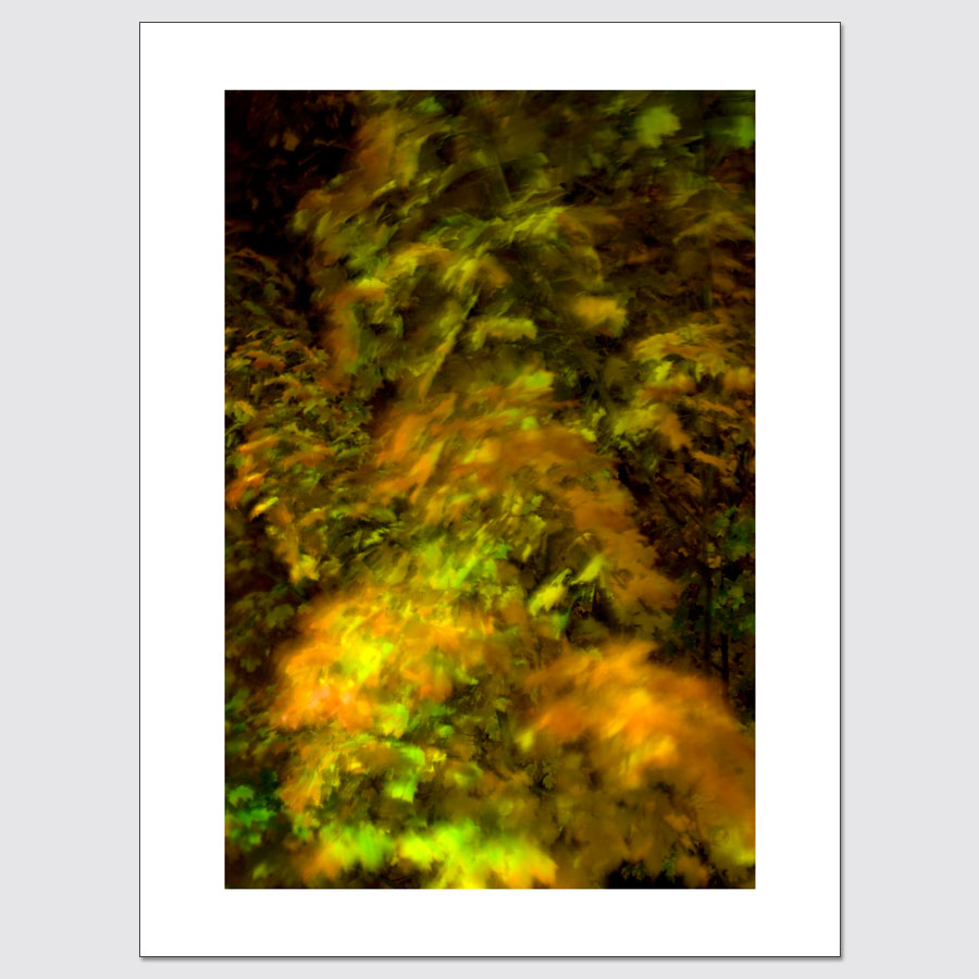 Autumn Leaves in Motion limited edition photographic print.