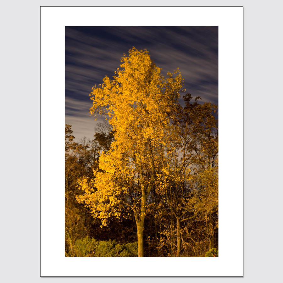 Yellow-leaved tree and clouds in motion at night
