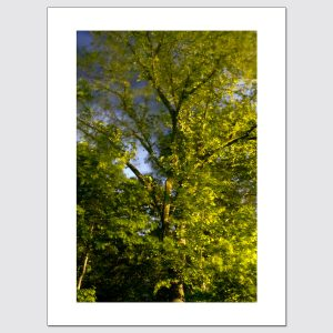 Trees in wind at night limited edition wall art