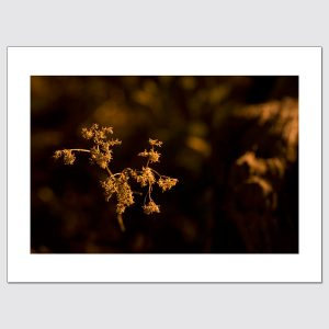 Golden plant illuminated by streetlights at night high-end wall art