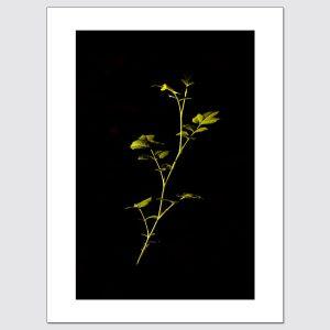 Lone plant illuminated by streetlights free stock image.