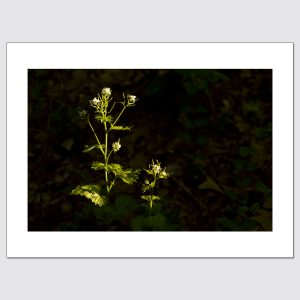 Plants at night limited edition photo print