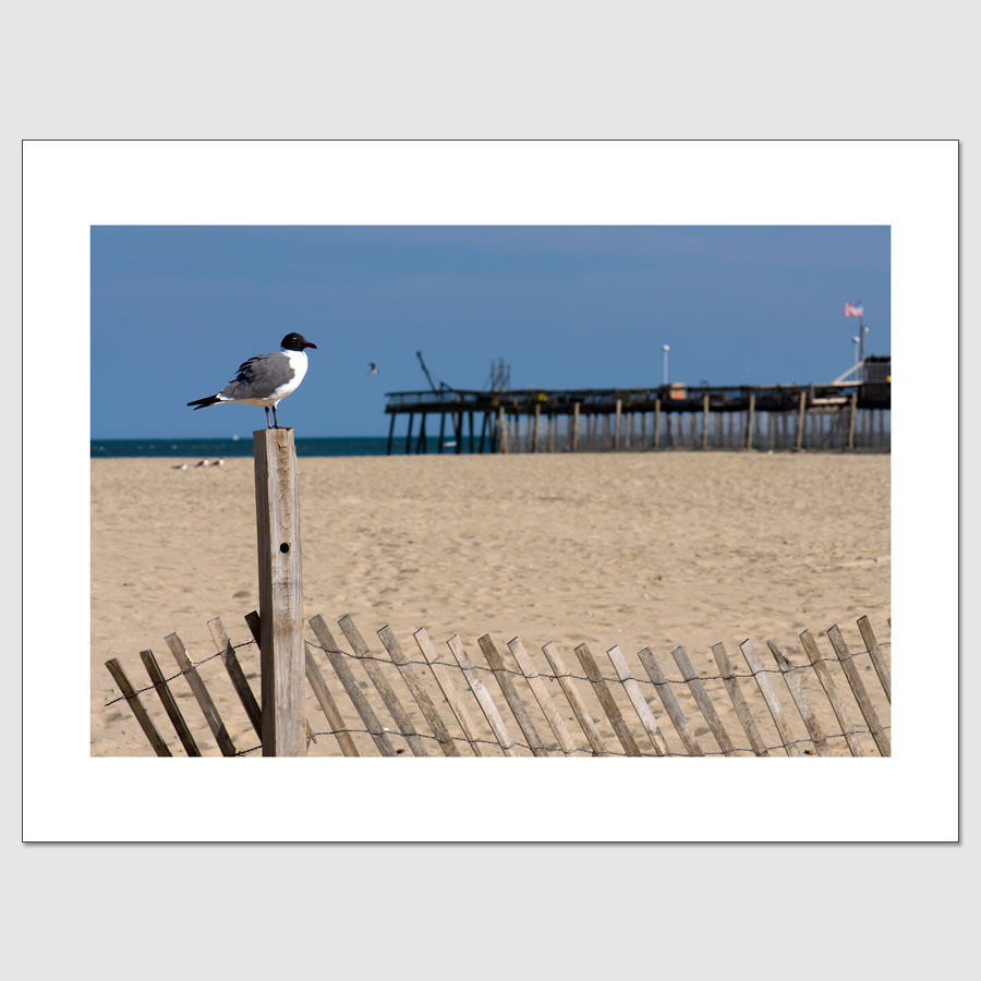 Wall-ready limited edition photo print of seagull on the beach in Ocean City, MD.