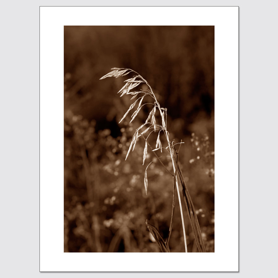 Plant long exposure limited edition wall art