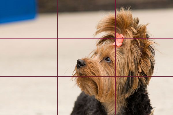 Rule of thirds in dog portraits.